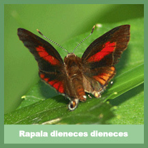 Rapala Dieneces Dieneces